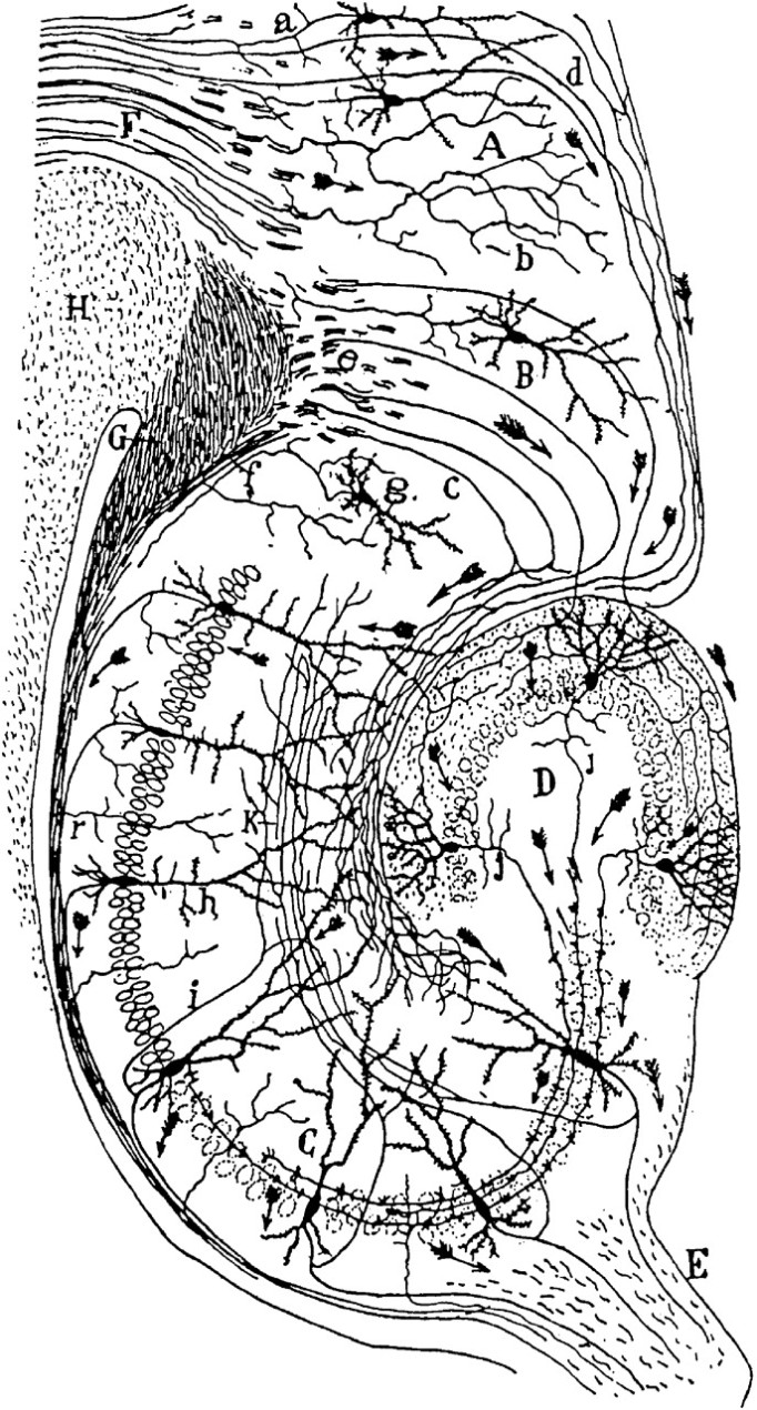 cajalhippocampus